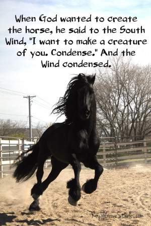 To Facebook Labels Friesian Stallion Horse Quotes Horses Picture