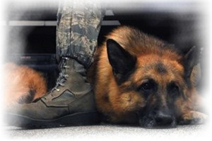 ... veterans day god blessed military work german shepherd memories day