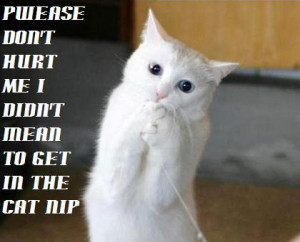 funny cat pictures with captions funny cat pictures with captions
