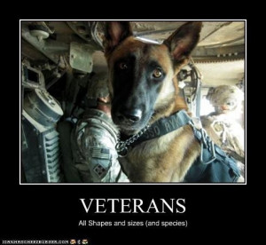 ... Heroes, Veterans Day, Service Dogs, German Shepherd, Animal, Work Dogs