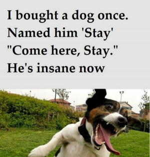 Insane_Dog_funny_picture