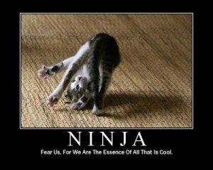 want a ninja kitty named Ajee!