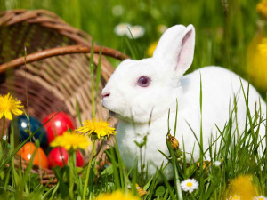 Cute Bunny Daydreaming...
