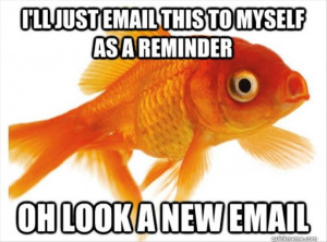 goldfish-have-short-memories.j...