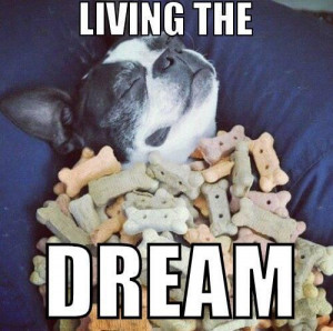 An inspirational picture quote of a cute pug dog under a blanket of ...