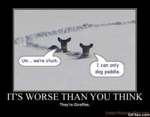 funny-animal.jpg