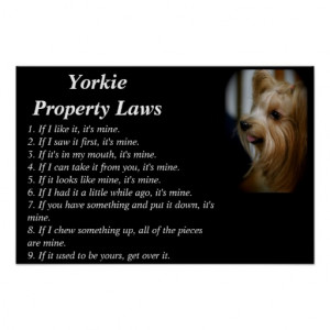 home images yorkie poster yorkie poster facebook twitter google+ ...