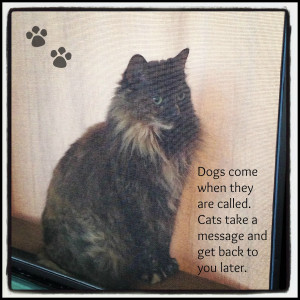 Love My Cat Quotes The first one is of my cat,