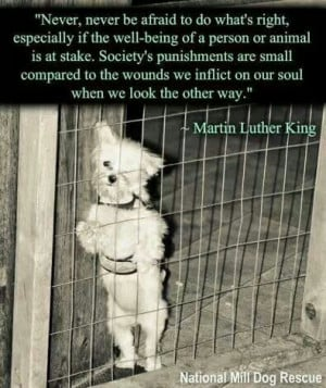 Dr. Martin was very smart!