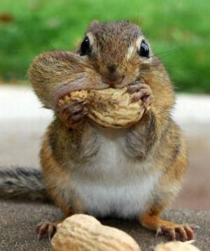 Funny Squirrel (68)