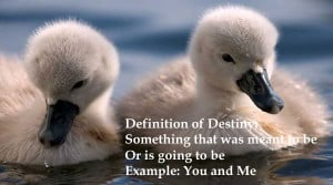 Definition of destiny: Something that was meant to be or is going to ...