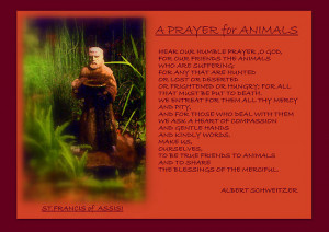 ... › Portfolio › '' A PRAYER FOR ANIMALS '' by Albert Schweitzer