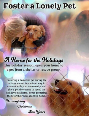 Foster a Rescue or Shelter Dog!