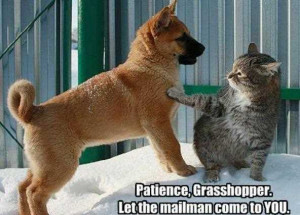 search terms quotes of patience grasshopper quotes motivational quote ...