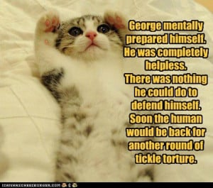 get well soon funny cats