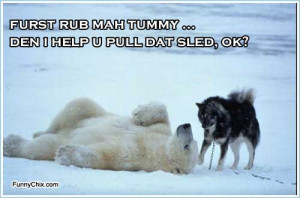 best new funny pictures polar bear and husky dog are winter friends