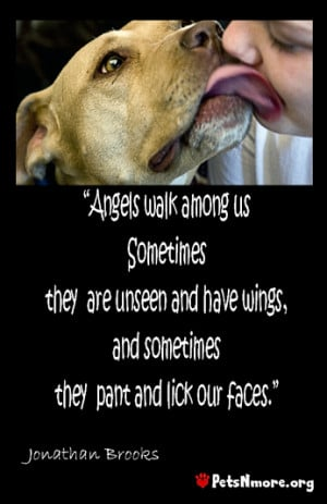 angels walk among us who have wings but sometimes they are dogs ...