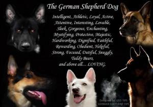 The German Shepherd Dog!Germanshepherd, German Shepherd Dogs Quotes ...
