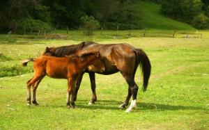 Horses Glitters (59)