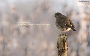 quotes, birds, nature,