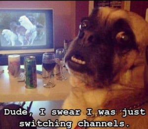 ... , Funny Pictures // Tags: Funny dog watching tv // September, 2013