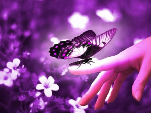 quotes / Nature poems and quotes with the title Butterfly ...