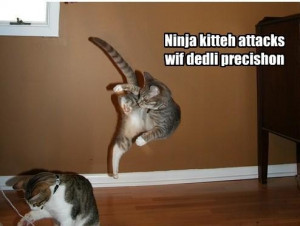 ninja kitty attacks with deadly precision