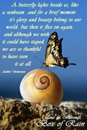 BUTTERFLIES INSPIRATIONAL QUOTES AND BEAUTIFUL PICTURES