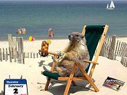 Vacation Funny Pictures Member Reactions Happy Groundhog Day