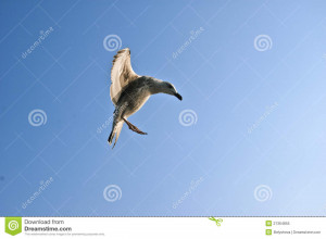 Funny Seagull Royalty Free Stock Photo Image