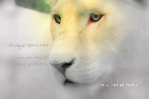 White lion, lion, quotes, sayings, white, strength, bars,