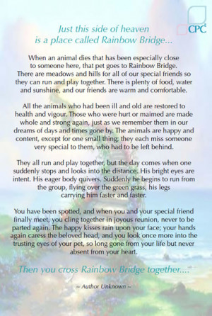 Remembering Your Pet
