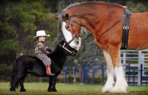 Small Horse, Big Horse