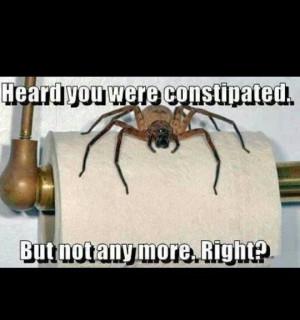 Spider humor