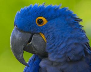 "... . Other birds, without speech, fly freely about."" ~ Saskya Pandita"