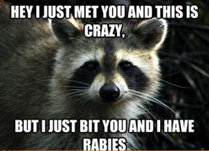 funny animal meme share this funny animal meme on facebook