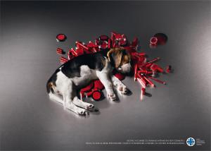 MAQUILLAJE: cosmeticos vs conciencia animal