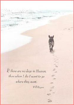 Sympathy dog loss quotes - photo#34