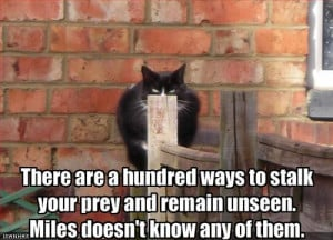 Funny Cute Quotes - Cute Funny Animal Pictures