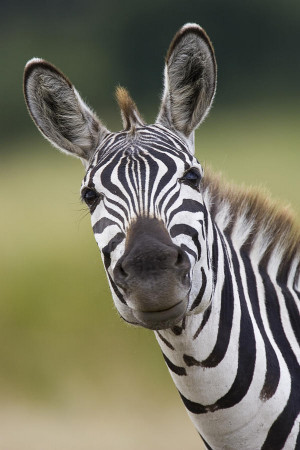 ... people with the negative outlook or opinion. Quotes, animals, zebras
