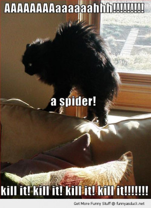 scared shocked cat lolcat animal bed spider kill it funny pics ...