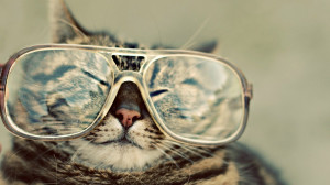 Image: Funny Cat wallpapers and stock photos