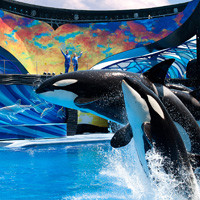 Top Attraction Tickets Florida Attractions Floridatix