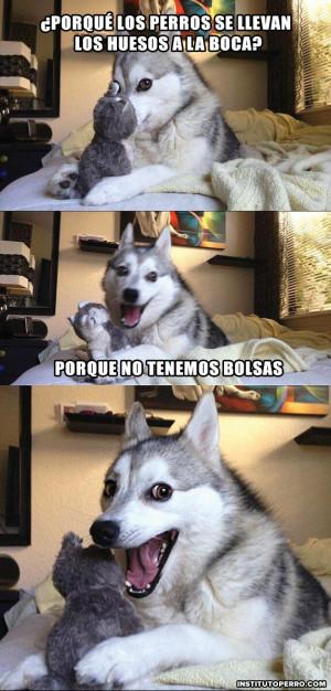 chistes contados por un perro husky