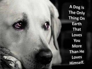Love My Dog Quotes He was the love in my life.