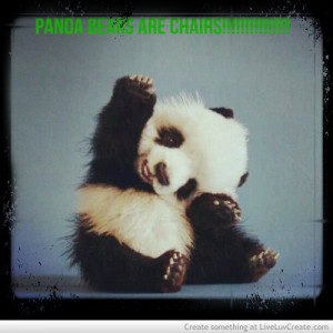 cute, panda bears are chairs, pretty, quote, quotes