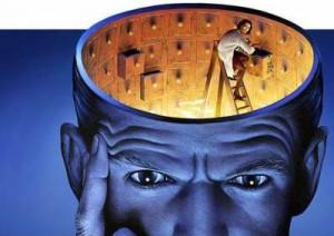 brain memory facts