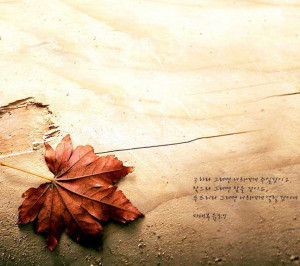 Maple,beach,Quotes,Thinking,leaf