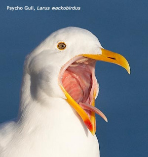 Seagull Funny