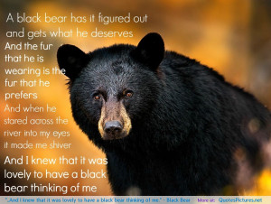 "... it was lovely to have a black bear thinking of me."" – Black Bear"